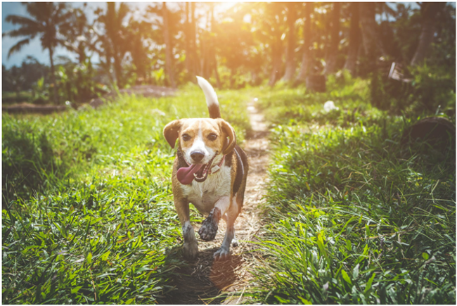 Natural Calming For Dogs That's Safe and Effective