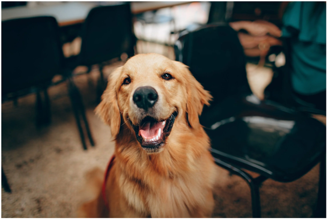 Why Natural Supplements For Dogs Provide a Gentle Alternative