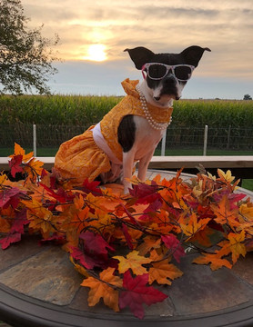 Fall Into Fashion