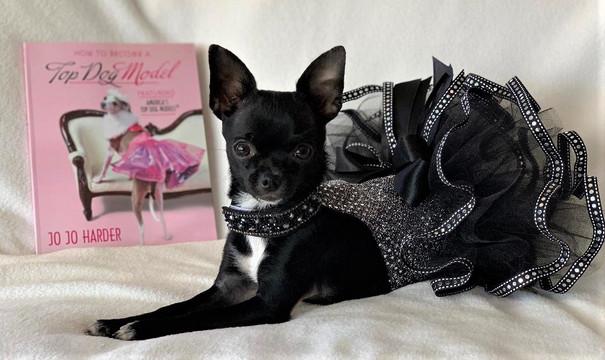 Meet Moto Girl the Pup Star