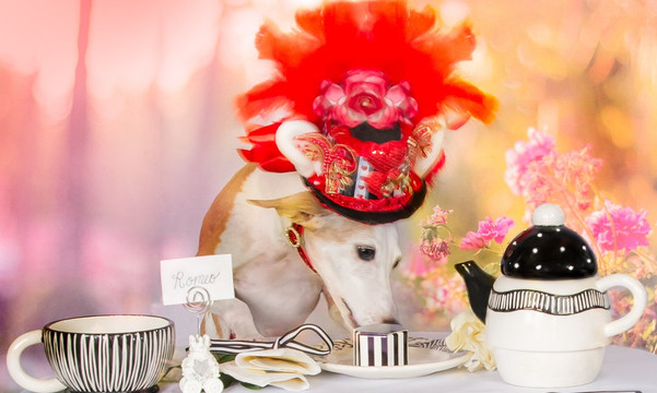 Take Glamorous Photos of Your Dog at Home