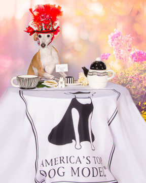 """America's Top Dog Model  """"Fairy Tails"""" Contest"""