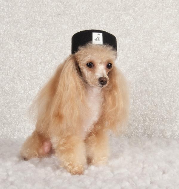 America's Top Dog Model  Black Felt Signature Pillbox Hat