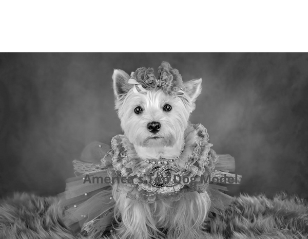 """Meet America's Top Dog Model 2021 """"Vintage Tails"""" Contest Winner and Finalists"""