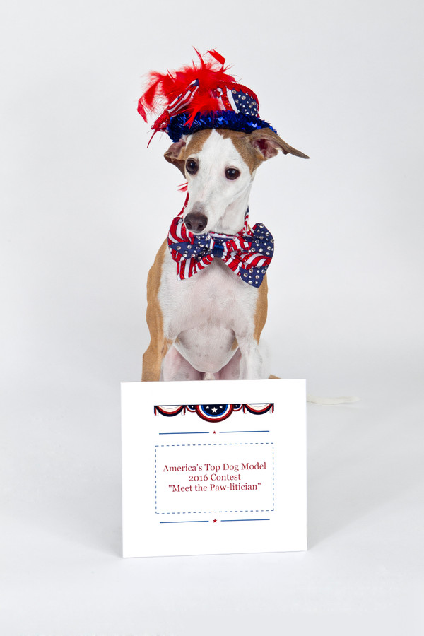 America's Top Dog Model (R) 2016 Contest