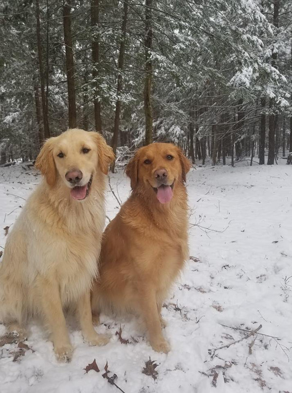 5 Indoor Activities For Fun With Your Dog When Its Too Cold Outside