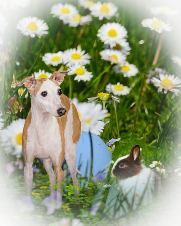 5 Fun Ways to Celebrate Spring with Your Dog