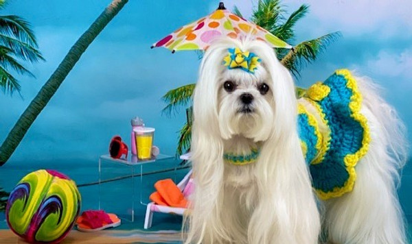 Dog Days of Summer Style
