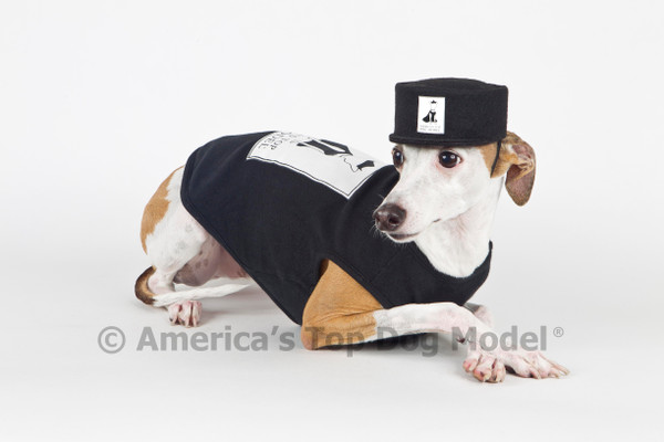 5 Tips for Launching Your Dog's Modeling Career