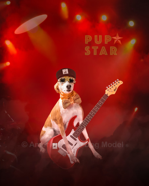 How to Become a PupStar