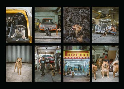 Hong Kong Dogs Postcards (set of 8 cards)