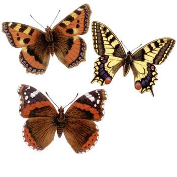 Butterflies Fusible Glass Waterslide Decal Set of 6