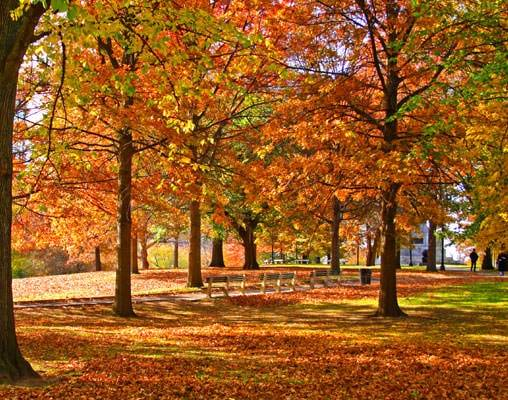 boston-public-library-fall-orig.jpg