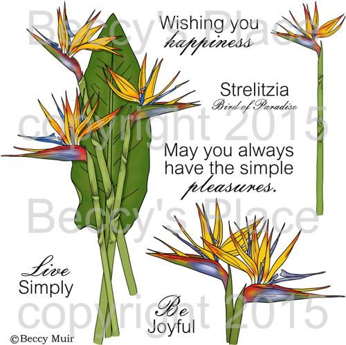 Strelitzia digital stamps