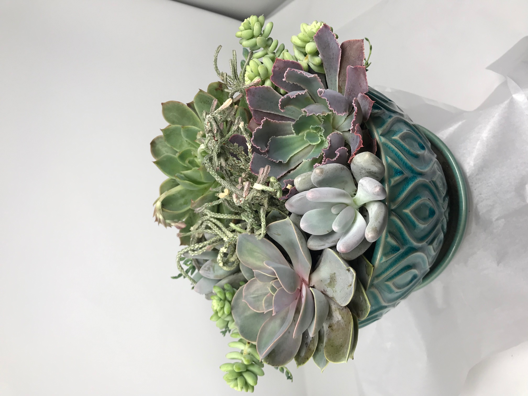 arrangement03.jpg