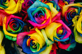 colorful-roses.jpg