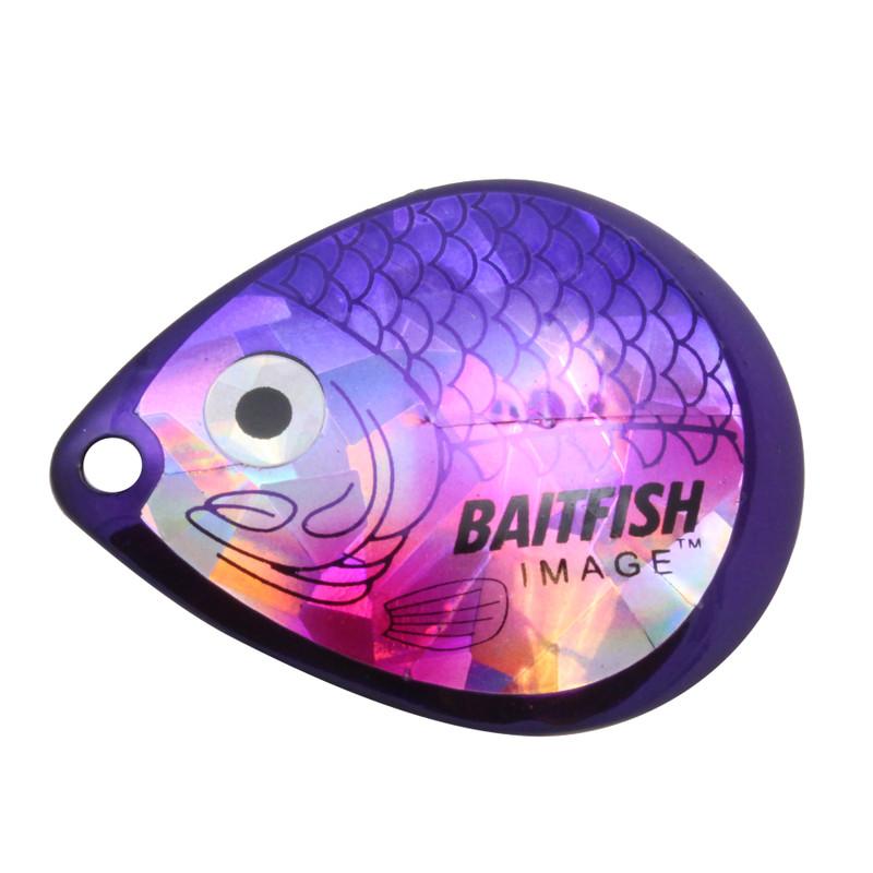 Cisco Purple