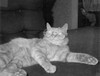 They always had a cat, but the cats didn't always have great names. This was their Yellow Cat. He was one of their favorite cats because he was so relaxed about everything. This photo was taken in 1965 or so.