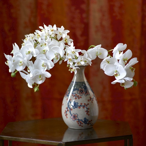 White Phalaenopsis Single Stem