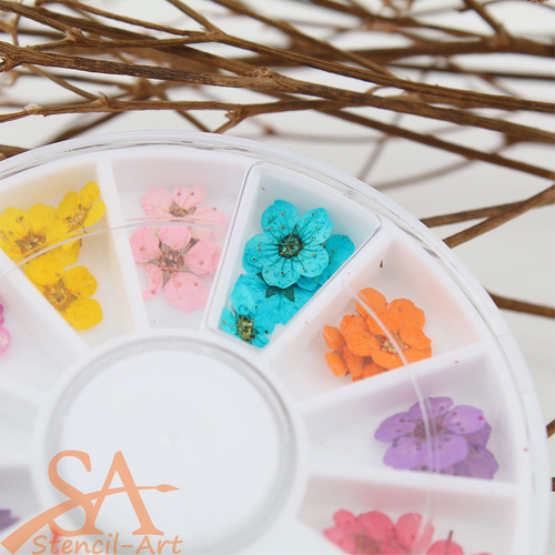 Real Mini Dried Flowers Mixed Colours 36 Pieces