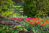 The Perch Hill tulip mix   why Sarah loves this