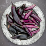 how to sow aubergines