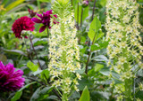 how to plant, grow & care for eucomis