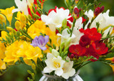 how to plant, grow & care for freesias