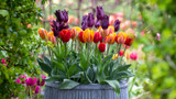 Venetian tulip collection | why Sarah loves this