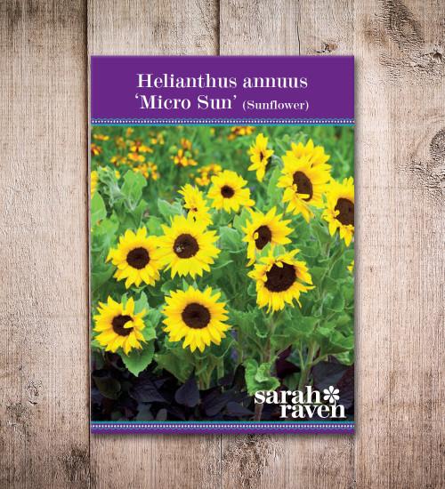Helianthus annuus 'Micro Sun'