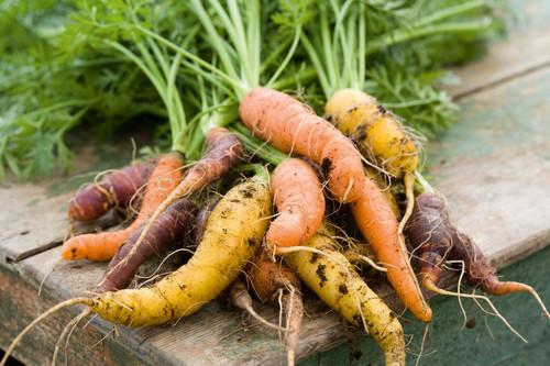 Carrot 'Harlequin Mix' F1
