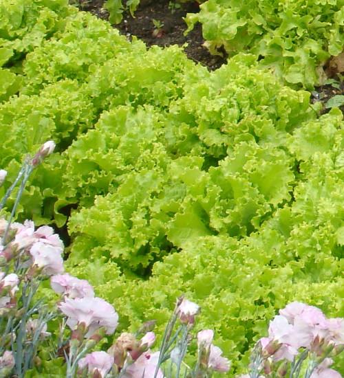 Lettuce Best Summer Mix