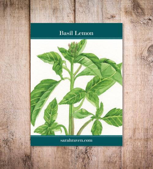 Basil 'Lemon'