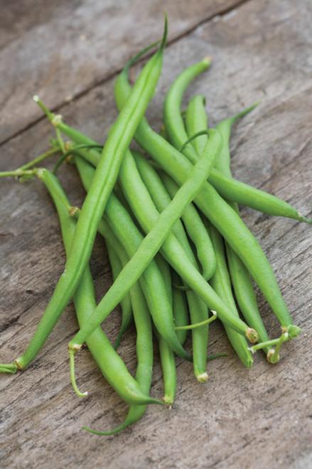 Dwarf French Bean 'Speedy'