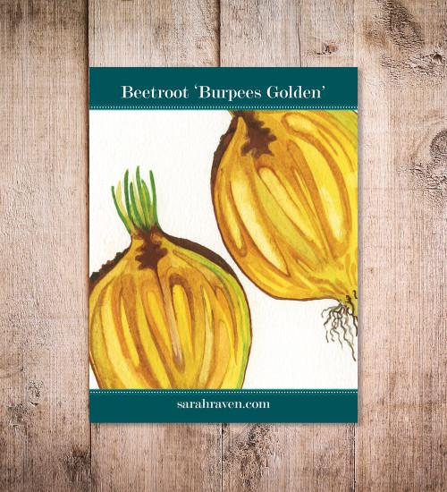 Beetroot 'Burpees Golden'