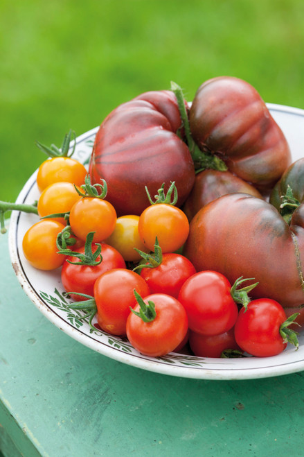 Essential Tomato Seed Collection