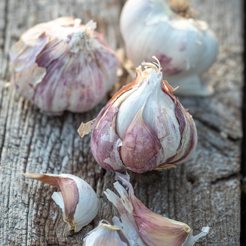 Garlic 'Early Purple Wight'