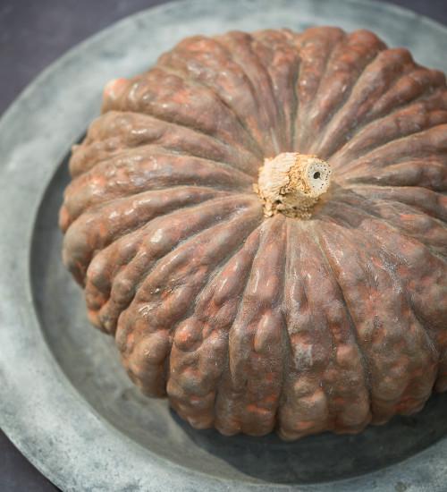 Pumpkin 'Marina Di Chioggia'