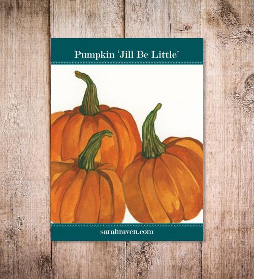 Pumpkin 'Jill be Little' (Climbing)