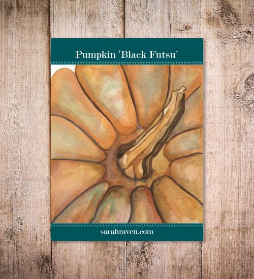 Pumpkin 'Black Futsu' (Cucurbita moschata)