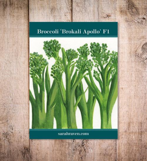 Broccoli 'Brokali Apollo' F1