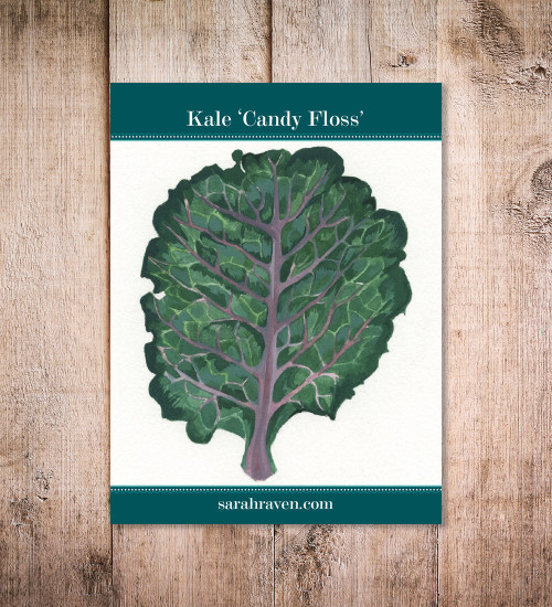 Kale 'Candy Floss'