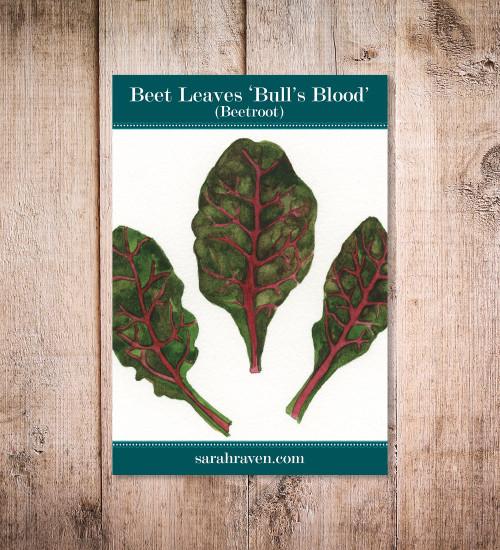 Beet Leaves 'Bull's Blood' (Beetroot)