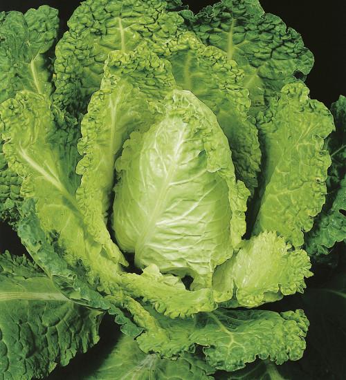 Cabbage (Savoy) 'Bloemendaalse Gele'