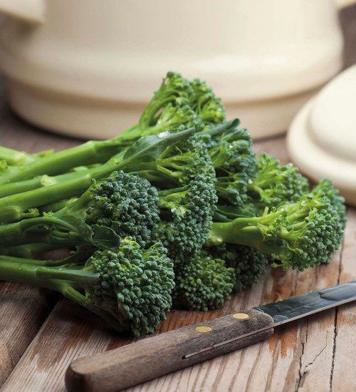 Broccoli 'Green Sprouting'