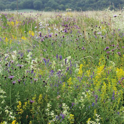 Sarah Raven Wild Flower Meadow Mix Seeds