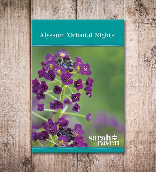 Alyssum 'Oriental Nights'