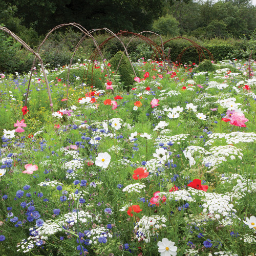 Sarah Raven Ultimate Flower Meadow Mix Seeds