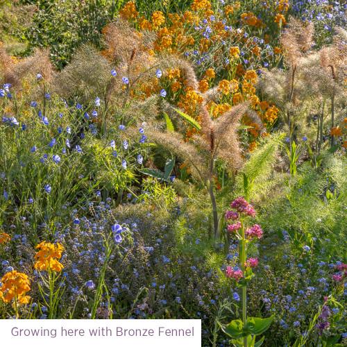 Meadow for Birds