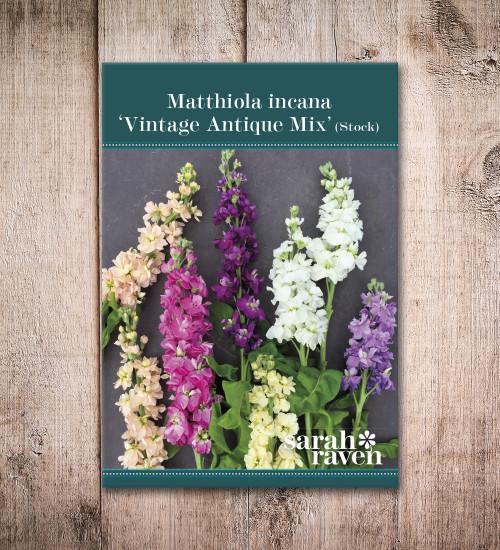 Matthiola incana 'Vintage Antique Mix'